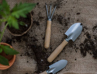 7 motive să plantăm toamna