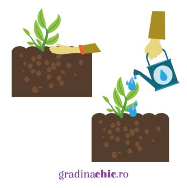Mic ghid de plantare a unei plante